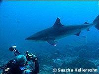 gibts im mittelmeer haie